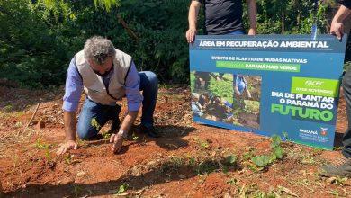 Foto de Paraná Mais Verde planta 1.500 árvores em Cianorte no Noroeste do estado