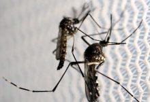 Foto de Vigilância em Saúde de Paranavaí registra sete casos confirmados de Dengue no município